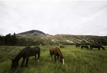 Kone sú bylinožravce