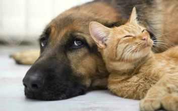 Dospelá mačka a pes Ako skamarátiť mačku a psa