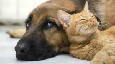 Dospelá mačka a pes