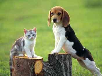 Mačiatko a dospelý pes
