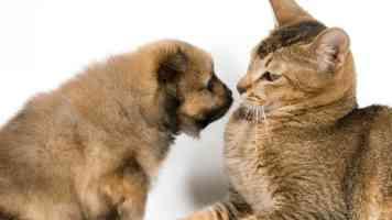 Šteňa a dospelá mačka