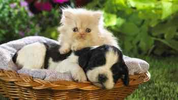 Šteňa a mačiatko