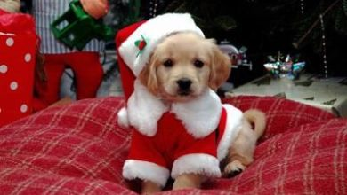 Top 10 vianočných filmov o psoch