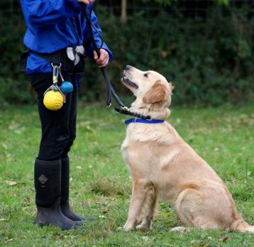 najčastejšie chyby pri treningu psa 10 bežných chýb pri výcviku psa