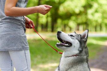 pes chyby pri treningu 10 bežných chýb pri výcviku psa