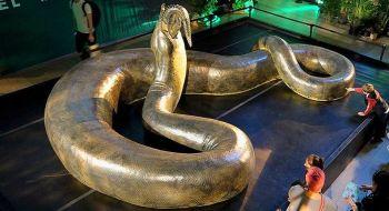 Titanoboa Najväčšie hady na svete Najväčší had na svete