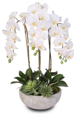 Biela orchidey