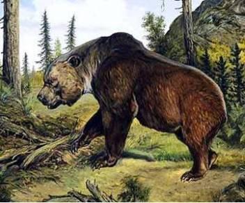 Medveď hnedý atlaský