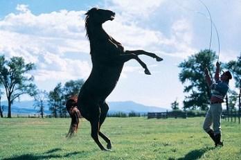 azikavac koni