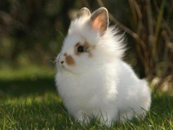 Je pre vás králik vhodný ?