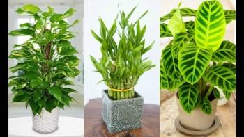 Rastliny do tieňa