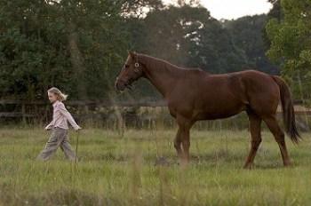 SPLNENÝ SEN o konoch Filmy o koňoch : Top 10