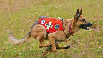 zachranarky pes
