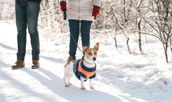 zimna prechadzka so psom