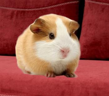 zvieratá vhodné do bytu