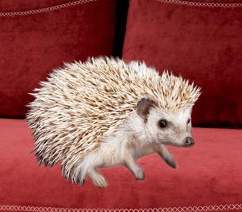 Netradičné domáce zviera