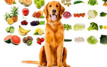 Ovocie a zelenina ktorú Psy môžu alebo nemôžu jesť