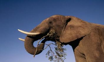 fakty o slonoch