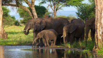 slonia rodina Fakty o slonoch