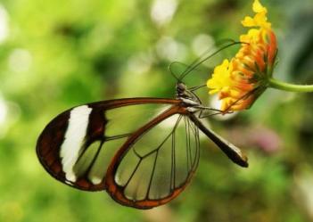najkrajší motýľ Najkrajšie zviera na svete