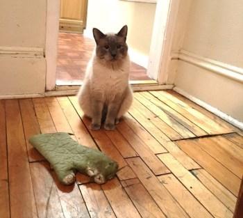 mačka nosí veci
