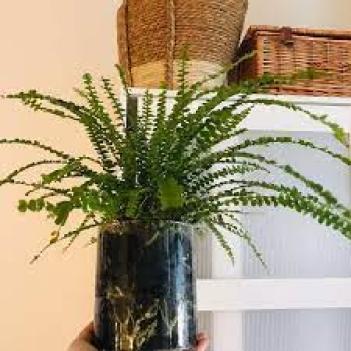 Rastliny do kúpeľne Paprade