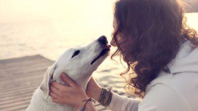 Ako pes vyznáva lásku