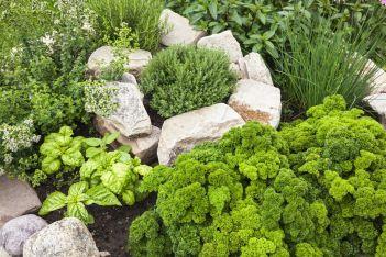 bylinky do záhrady