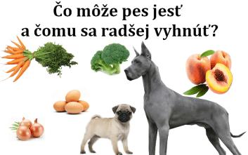 Čo môže pes jesť a čomu sa radšej vyhnúť