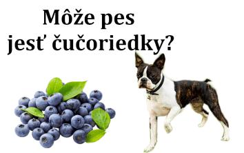 Môže pes jesť čučoriedky