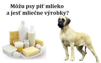 Môžu psy piť mlieko a jesť mliečne výrobky