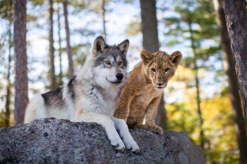 Vlk a lev online cz dabing alebo titulky