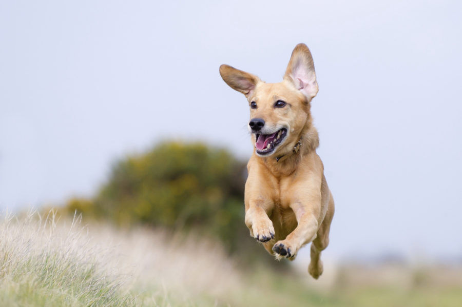 Perchè acquistare Top Dog per il Tuo Cane?