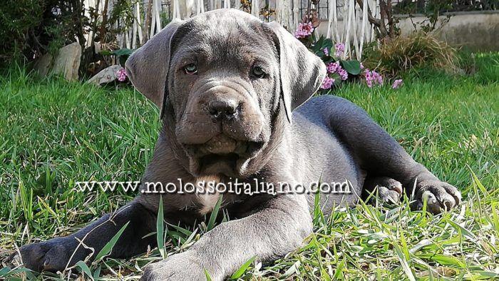 Puppy quaglia e le nuove confezioni da 3kg Top Dog