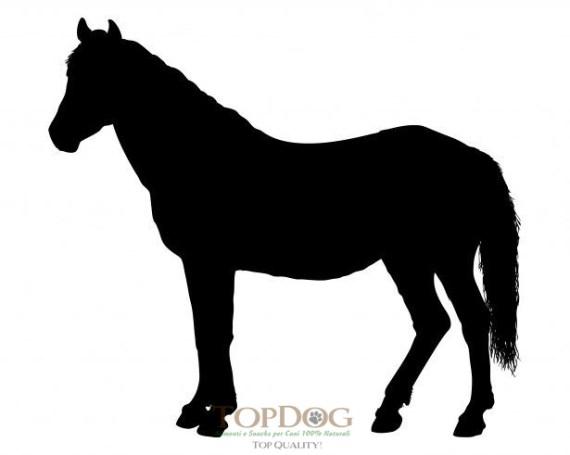 crocchette per cani al cavallo