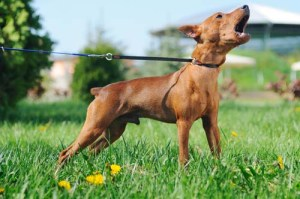 preventing dogs from barking