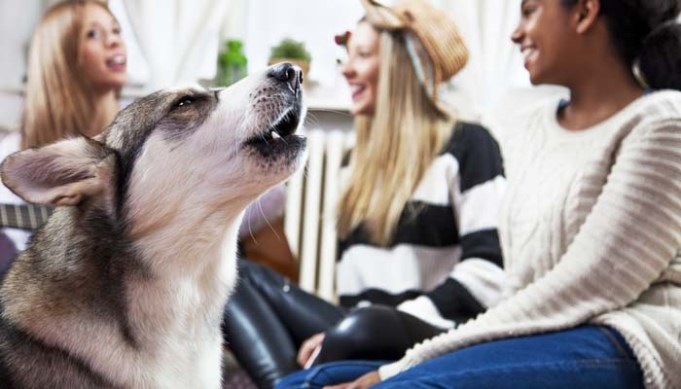How to Stop Dog Barking with Command Training