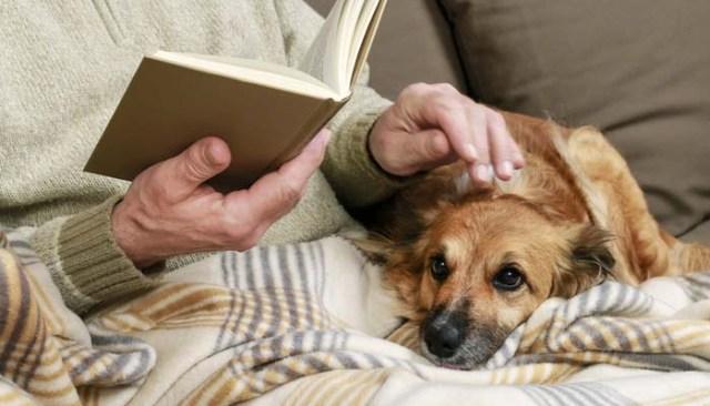 Adopting Older Preloved Dogs