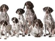 Best Dog DNA test kit for Dogs