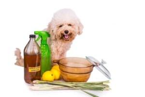 Homemade Dog Shampoo Takeaway