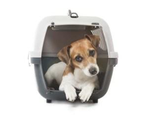 Adult dog crate training