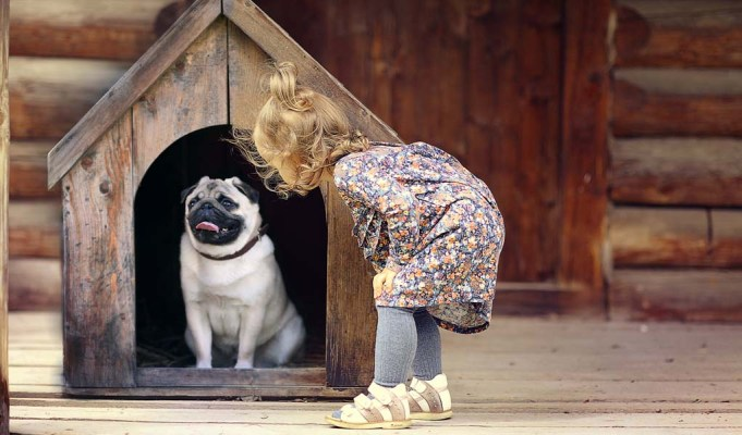 How to Stop Dog From Pooping in House