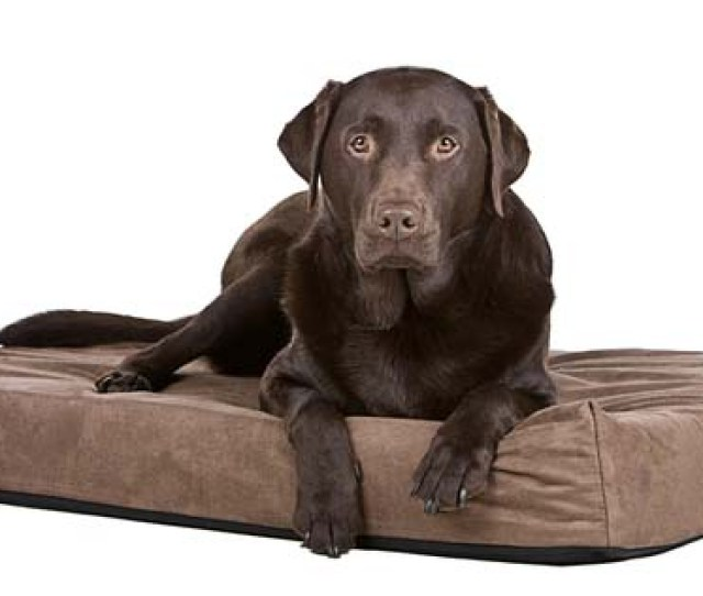 Best Chew Resistant Dog Beds For Dogs Reviews
