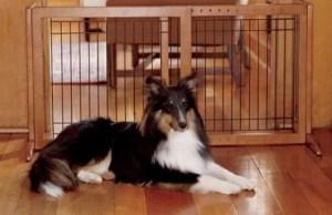 Indoor Pet Gates for Dogs Doors A Buyer's Guide