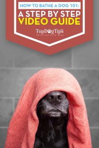 How To Bathe A Dog 101 - A Step-By-Step Video Guide