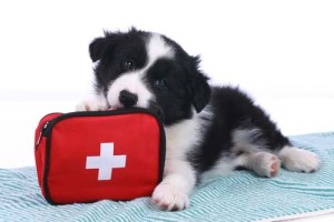What dog owners need to know about first aid for dogs