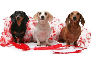 14 Fun Valentine's Gifts for Dogs