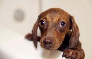 Dog Bathing Tips - How to Give a Dog a Bath