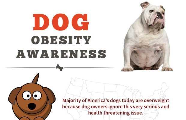 Dog Obesity Awareness Infographic