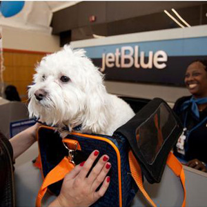 Dog Travel 101 How to Ship a Dog - Airlines